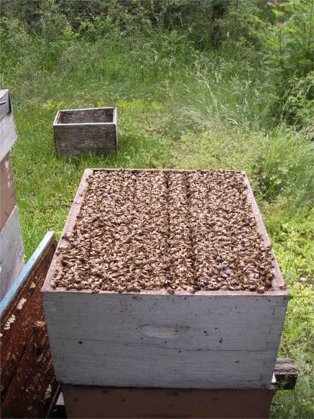 hausse pleine de miels